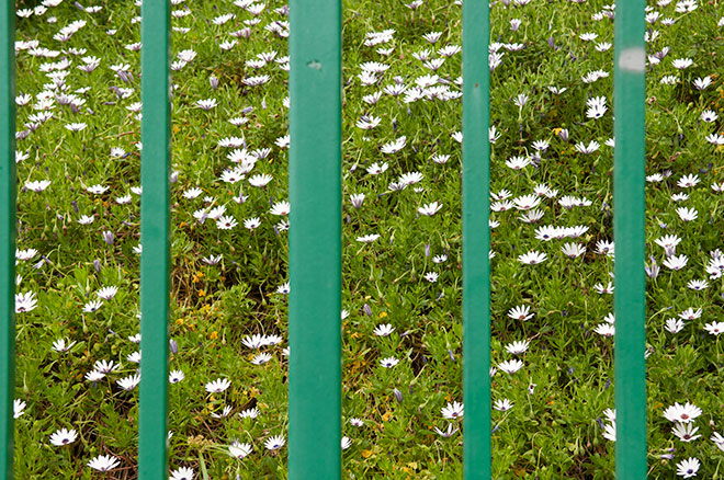 green-metal-security-bars-block-white-flowers-by-john-ussenko-dtla