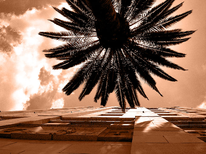 Visionary photographer, john Ussenko captures this palm tree and downtown LA building perfectly.